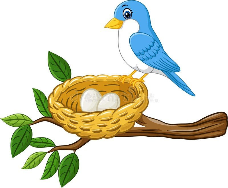 bird-egg-nest-isolated-white-background-illustration-76116062